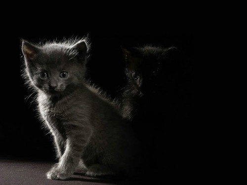 animal, animals, cat, cats, cats photography, kittens