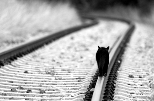 animals, black and white, cat, cats, grey, metaphor