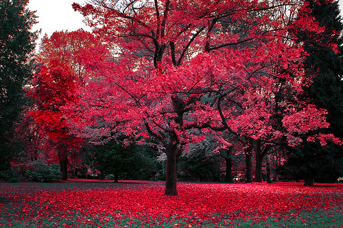 Beauty Distortion Fall Leaves Pink