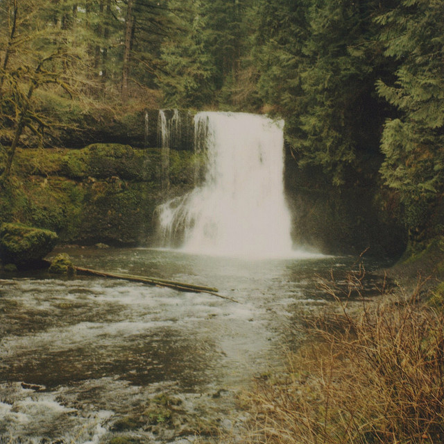 forest, green, nature, photography, vintage, water