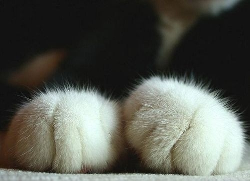 animals, cat, cats, cute, fur, furry, nice, paw, paws, soft