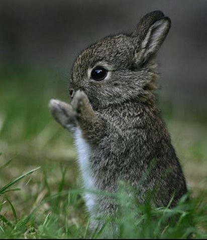 adorable, animal, animals, baby, beautiful, big world, bunnies, rabbit, kawaii, smile, cute, fofo, clap, photography, nature, love, bunny!!!, sweet, cool, i like, ????, easter, rabbits, bunny, coelho, conejo, fluffy, grass