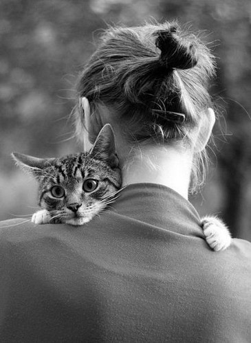 animal, animal love, animals, back, black and white, cat