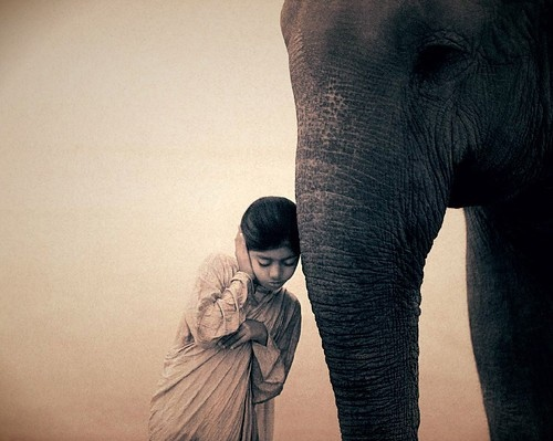 animal, art, black and white, child, conceptual, elephant