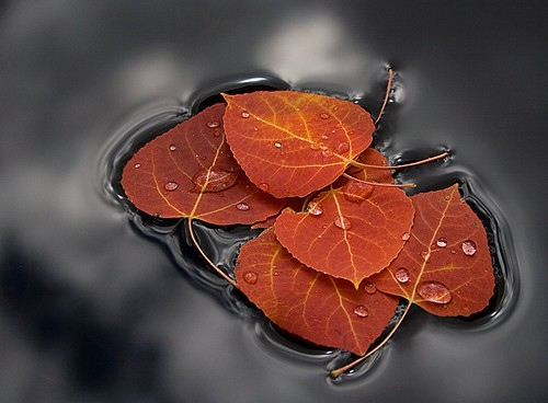 agua, autumn, autumn float, beautiful, color, colour