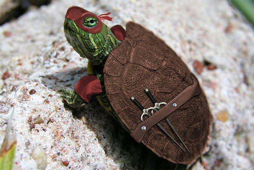 Animals funny lol ninja turtles rafael turtle