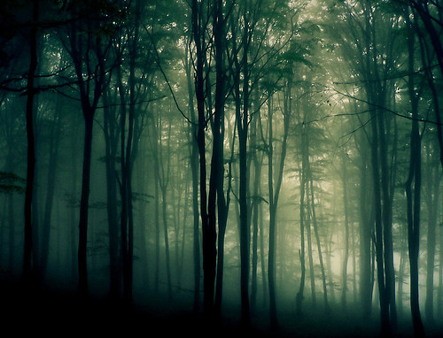 atmosphere, color, fog, forest, landscape, light