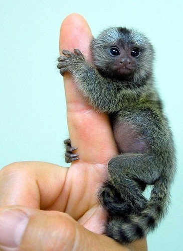 animal, animals, baby, big, cute, finger