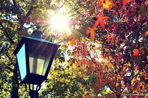 autumn, color, colour, fall, forest, lamp, lantern, light, photography, sun, sunlight, nature, trees, leaves, home