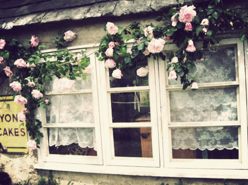 flowers, lace, pink, rose, vintage, white, window
