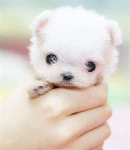 omg cute adorable puppy dog puppies amp favim dogs pup pups pets very