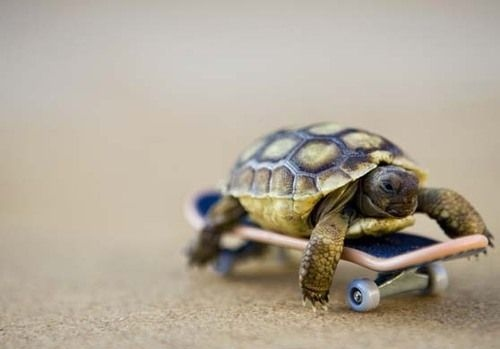 tiny turtle