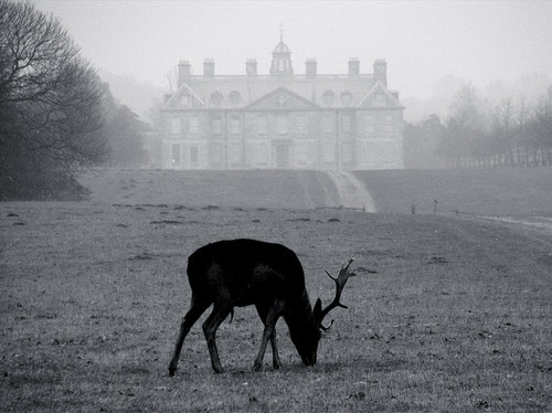 b&amp;w, black and white, cold, deer, fog, foggy