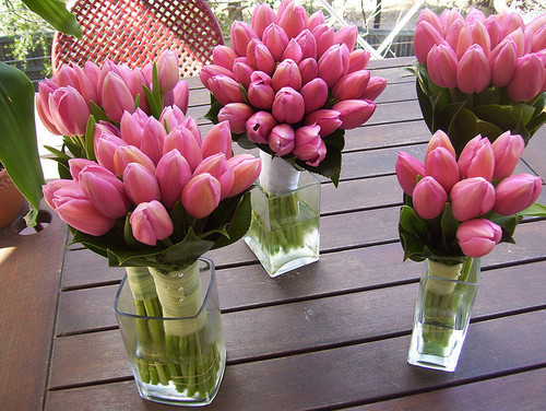 cute, flowers, pink, pretty, tulips