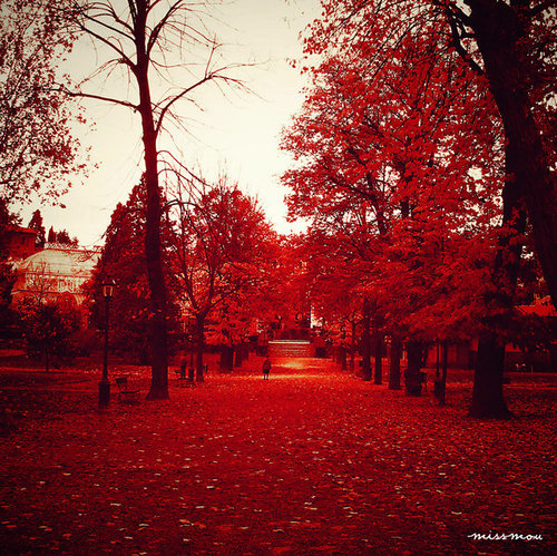 awesome, cute, place, pretty, red, sun
