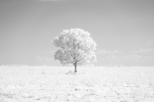 frost, nature, photography, sky, snow, tree