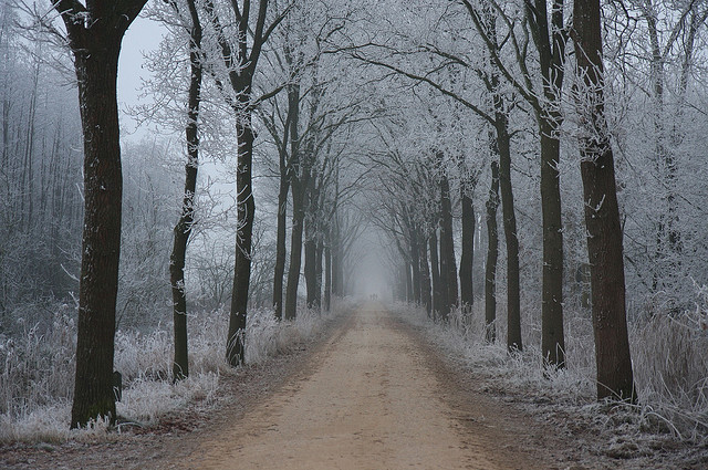 cold, forest, frost, path, trail, tree-lined