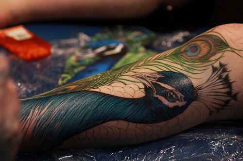 color, colorful, colour, colourful, gorgeous, nice, peacock, tattoo