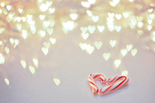 bokeh, candy cane, christmas, heart, puppy, red, white