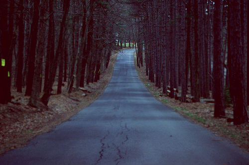 beautiful, dark, depressing, forest, nature, path