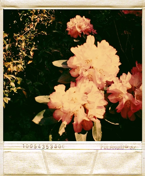 flowers, green, photography, pink, polaroid, pretty