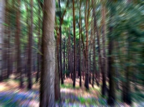 forest, motion, nature, photography, trees, trippy, woods
