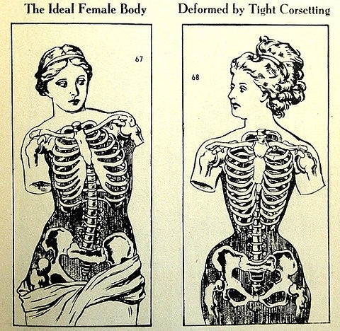 anatomy, corset training, corset-training, corsetry, corsetting, female body