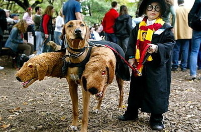 child, cute, dog, gryffindor, harry potter