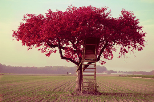 beautiful, dream, loooveee, nature, tree-house