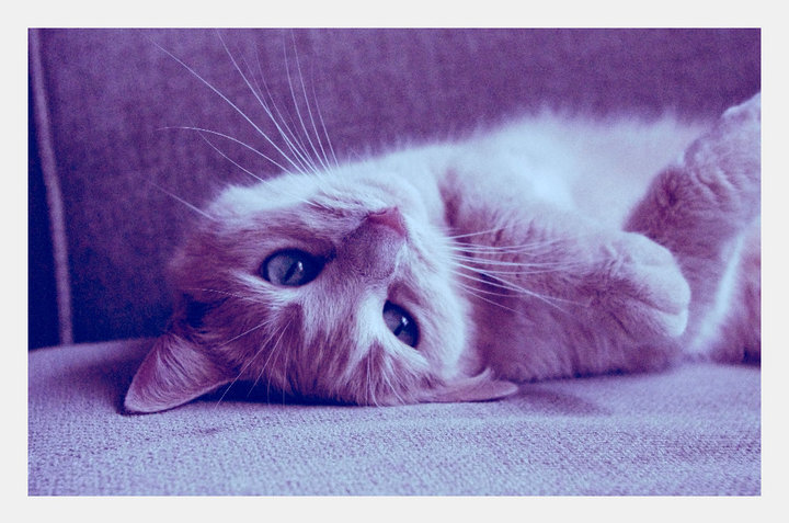 - a little love, - we heart it, adorable, beautiful, cat, couch