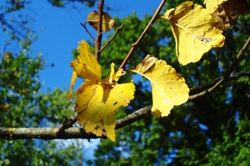 autumn, branch, bright, fall, leaves, nature, yellow