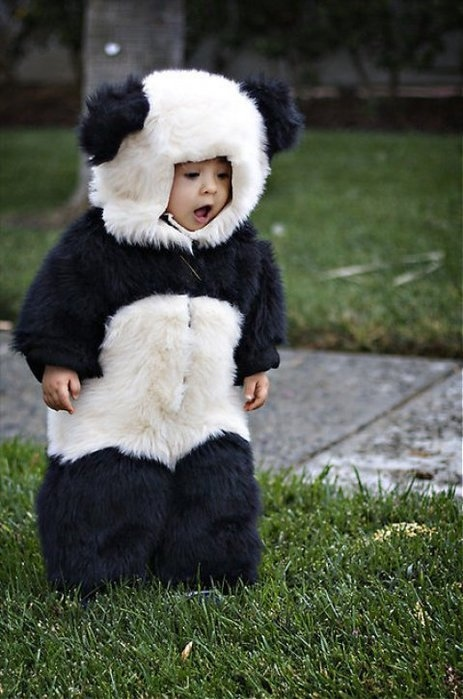 adorable, baby, children, costume, cute, kid, leilockheart, panda, photography