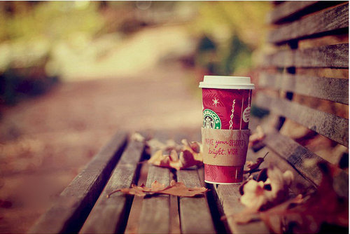 bench, christmas, falling, leaves, starbucks, wooden