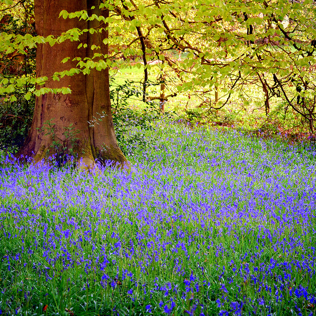 blue, flowers, grass and tree