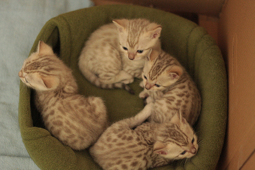 awww, baby, brown, cat, cats, cute