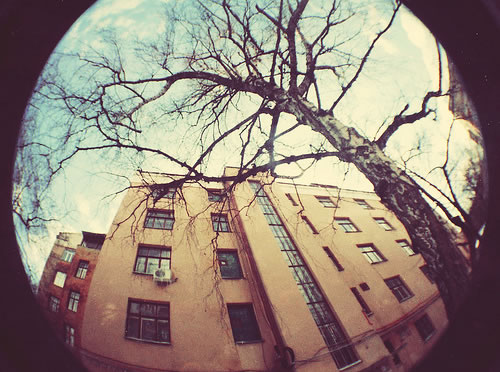 fish eye, lomo, lomography, sky, tree