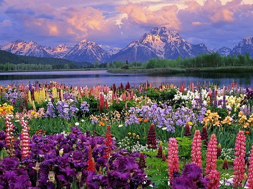 amazing, beautiful, flowers, mountains, nature, pretty, water