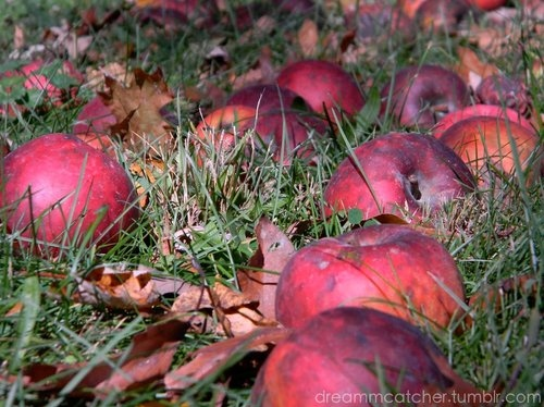 apple, apples, fruit, grass, nature, photography