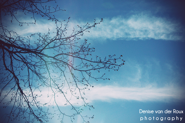 blue, branches, clouds, cold, d60, frozen