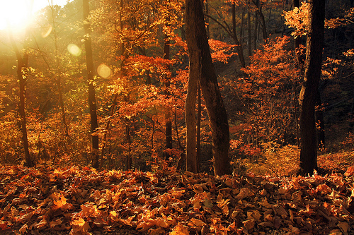 autum, fall, forest, leaves, woods