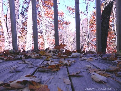 autumn, deck, fall, leaves, nature, photography, porch