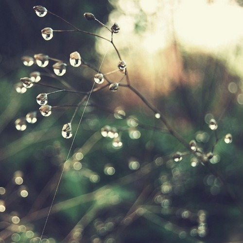 bokeh, branches, bright, dew, light