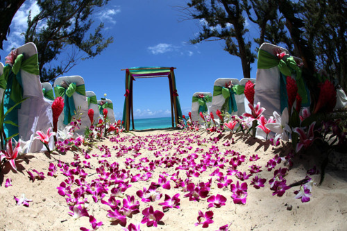 beach, floral, flowers, paradise, summer, tropical, wedding