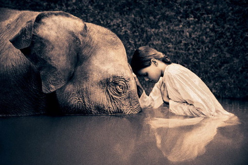 child, elephant, sorrow, water