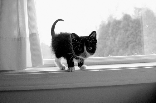 black and white, cats, cute, i love cats, kitten