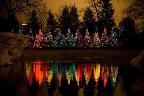 christmas, colours, lights, rainbow, trees