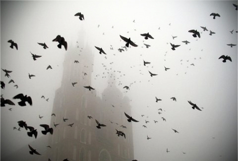 birds, foggy, mist, pigeons, shadows