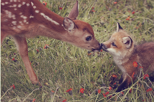 cute, deer, flowers, fox, fur, grass, kiss, light, lights, love, photography, scene, scenic