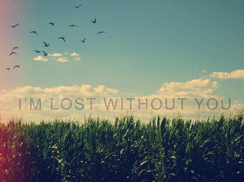 beautiful, birds, grass, lost, love, nature, nice, pretty, sky, without