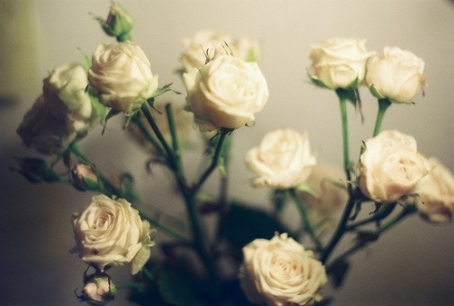 flower, love, romance, roses, white